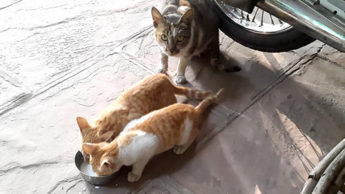 mommy cat with kittens